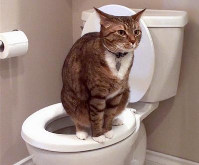 Cat diahhria (Buyontheway)