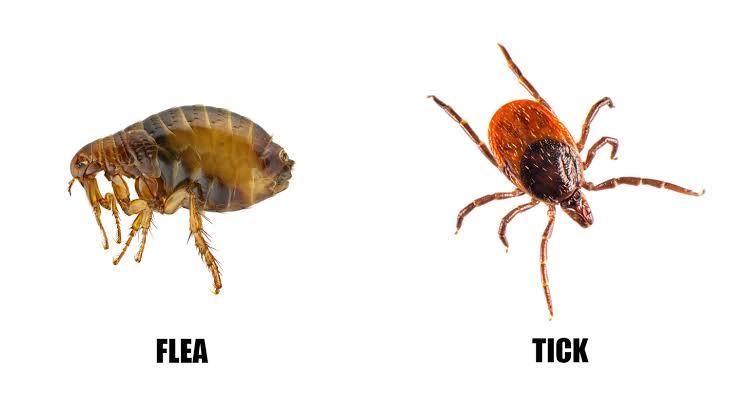 Tick & Flea (Buyontheway)