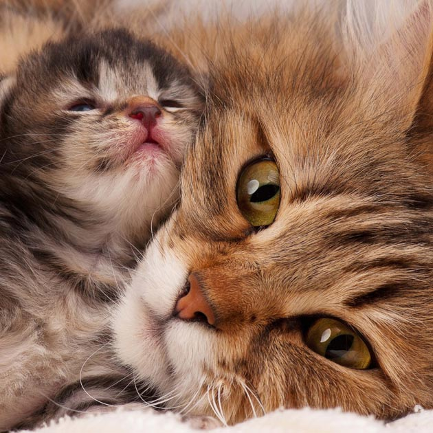 Caring for a mother cat and kittens (Buyontheway)